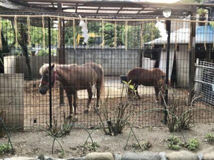 満月の熊野神社に宵参り馬を見ながら月の出を待つ