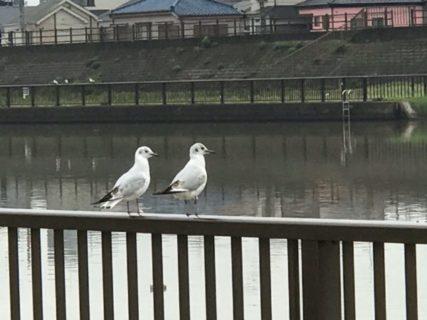 白い鳥、鴎、千鳥、都鳥